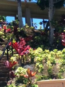 hawaii.2